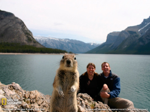 500x_squirrel-portrait-banff-sw